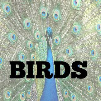 Wildlife (Birds)