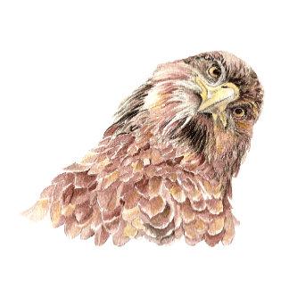 Bird Hello