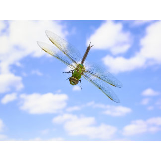 Green darner (Anax junius) flying against clouds