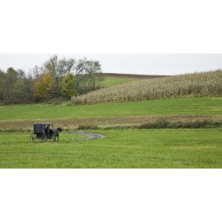 USA, Northeastern Ohio. Amish buggy on farm