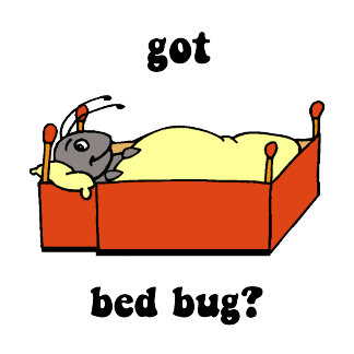 bed bug 3