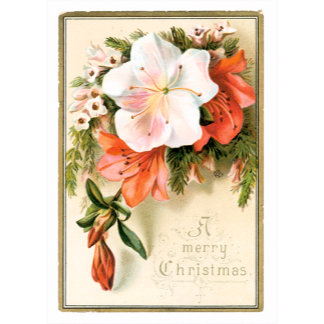 A Merry Christmas ~ Flowers