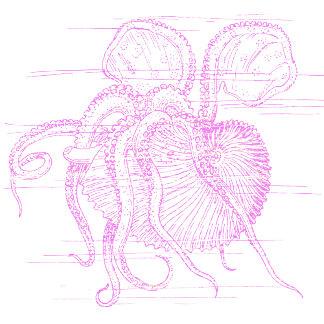 Nautilus (letterpress style on dark)