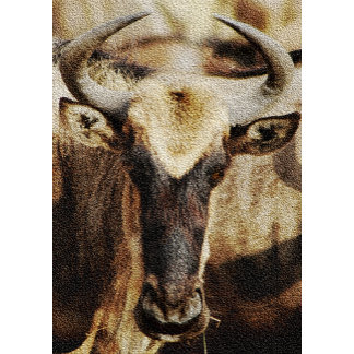* Antelope / Buck