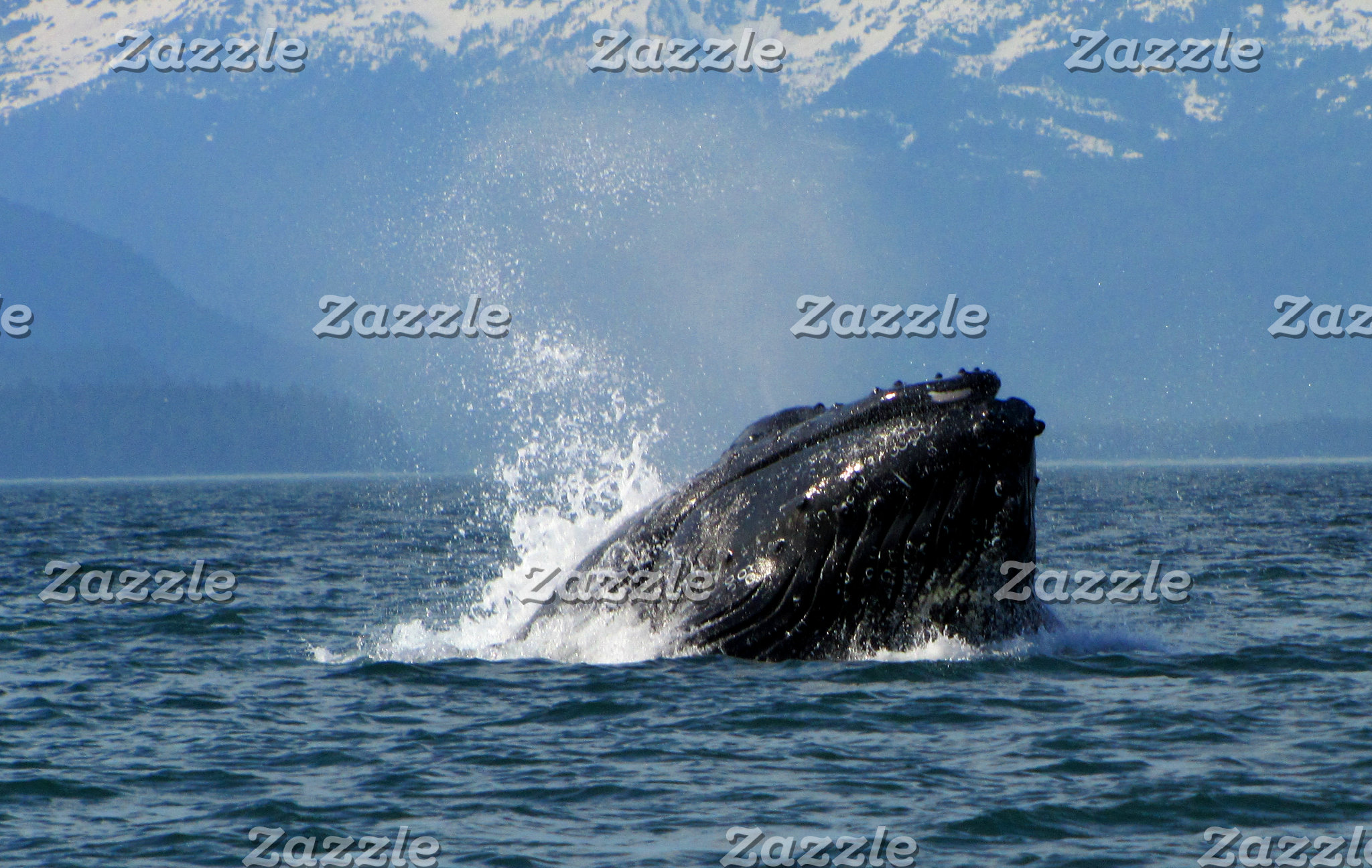 Wildlife-Marine Animals