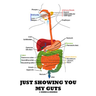Just Showing You My Guts (Black Font Digestive)
