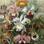 Vintage Orchids