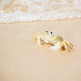Brazil, Rio de Janeiro, Buzios, Crab on