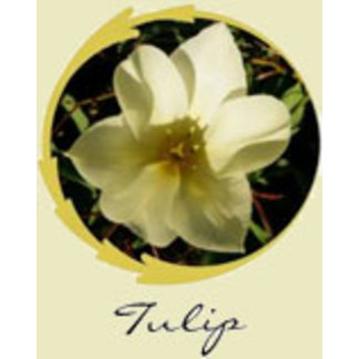 White Tulip Gifts