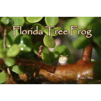 Florida Tree frog on Bonsai tree photograph design