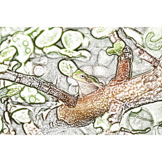 tree frog in bonsai colored pencil animal drawing