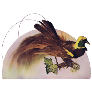 American Bird Breeds T-Shirts and Gifts