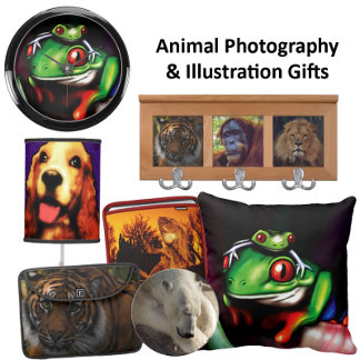 Animal Illustrations and Photography