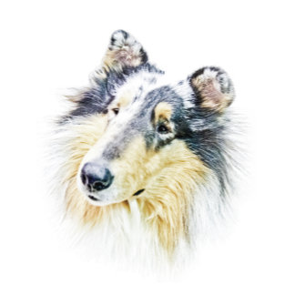 Beautiful Rough Collie dog art