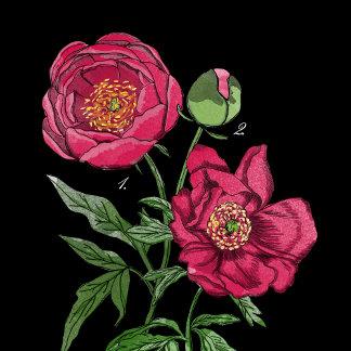 Botanical | Peony