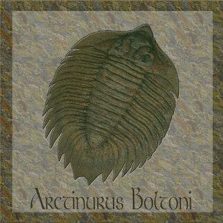 Arctinurus Boltoni