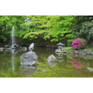Japan, Kyoto. Heron in fresh green leaves