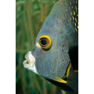 Dutch Antilles, Bonaire, Underwater close-up