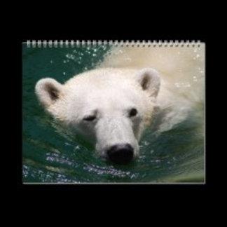 * Polar Bears