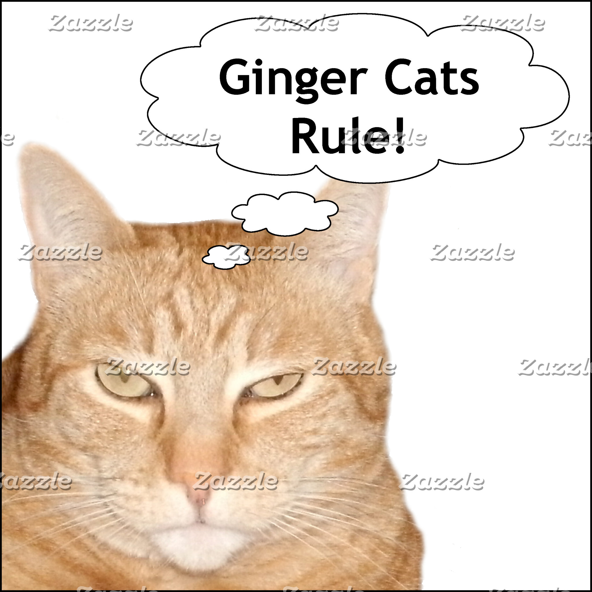 Ginger Cats Rule!