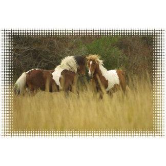 Paint Ponies Design