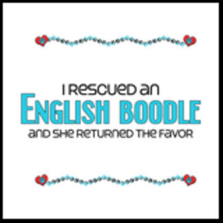 I Rescued an English Boodle (Female Dog)