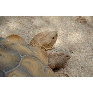 old tortoise reptile back view turtle animal