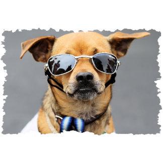 Chihuahua - Hello Ladies!