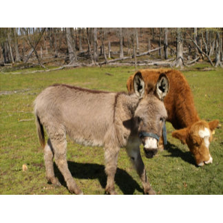 Cows,Donkeys,Mules,Horses