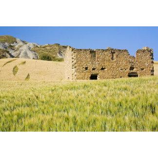 Italy, Tuscany, Abandon Old Home Ruin in Wheat