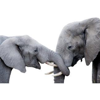 Animals, Wildlife & Pets