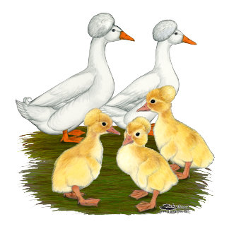 Crested Duck Family