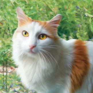 """Cat - """"Samson"""""""