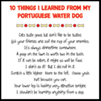 Things I Learned From My Portuguese Water Dog Joke