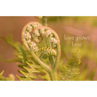 Love Ferns