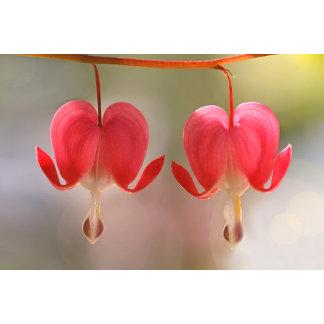 Pair of Bleeding Hearts Flowers