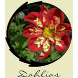 Red Dahlia Gifts