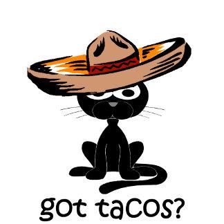 Got tacos? cat