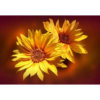 Prints - Floral