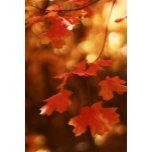 best autumn leaf.jpg