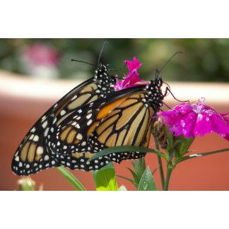 Monarch Twins #1