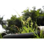 Grass on wall.JPG