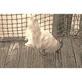 white rooster eating sepia