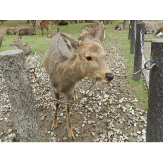 Deer chewing a chain