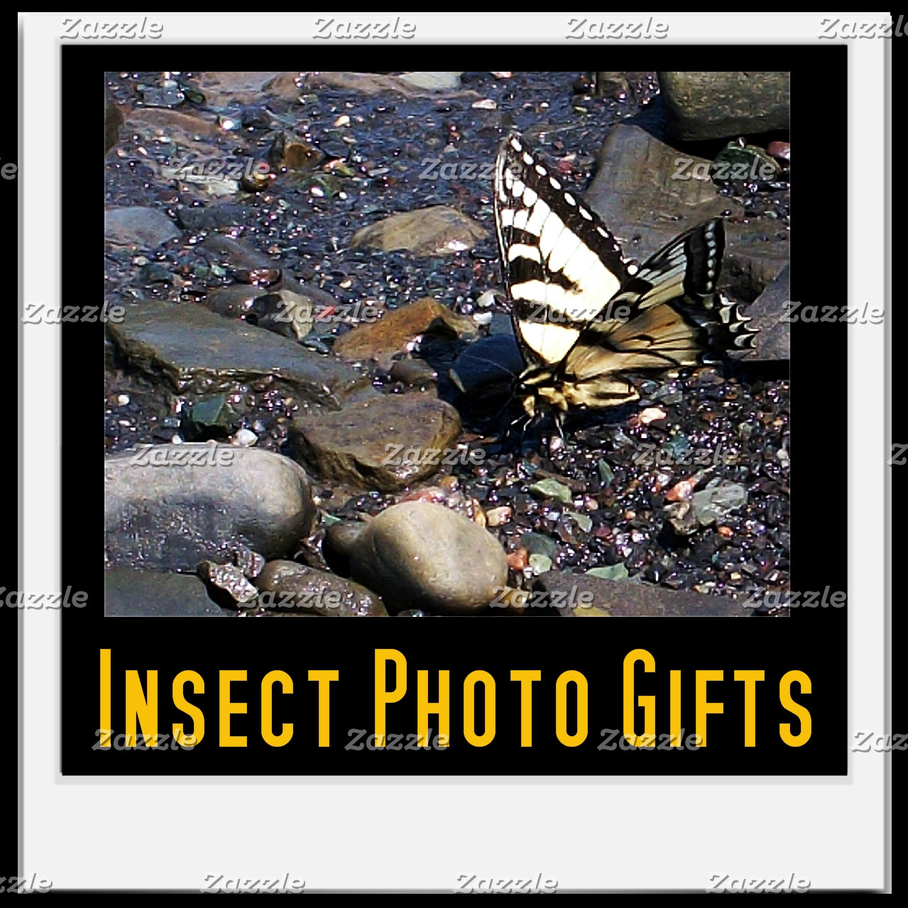 Insect Photo Gifts