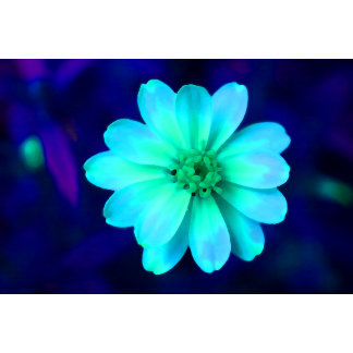 blue daisy colorized flower pretty plant design