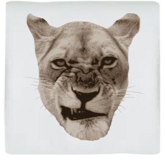 Snarling Lion Cat