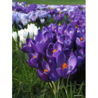 Crocus Flower Monograms