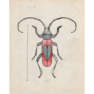 Insect Series | Red Beetle