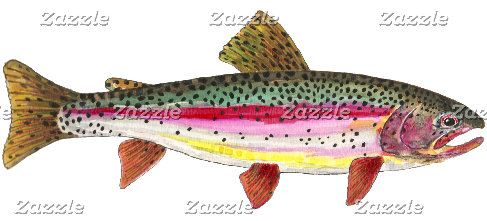 . RAINBOW TROUT